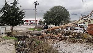 Fırtına ağaçları ve elektrik tellerini devirdi