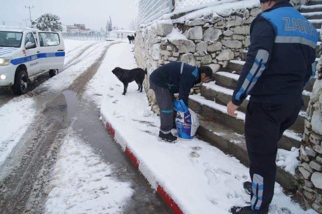 Geyikli Belediyesi sokak hayvanlarını unutmadı