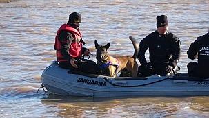 Kadavra köpekleri Çanakkale'de bir ilki başardı