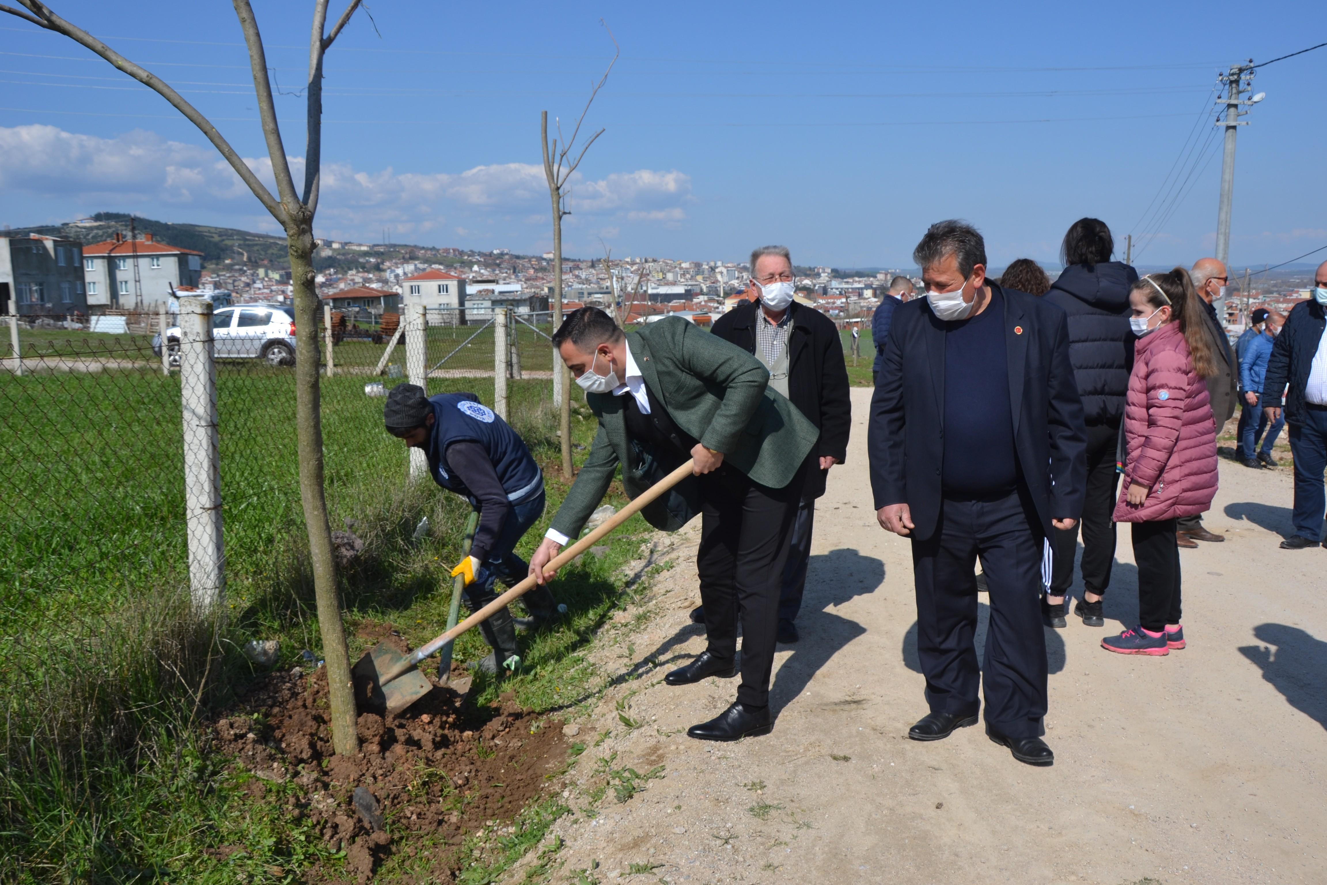 Biga Yeniceköy mahallesi ağaçlandırıldı