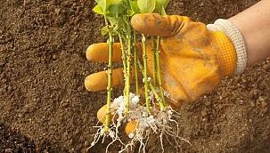 Bitkisel üretim çalışmaları hızla sürüyor