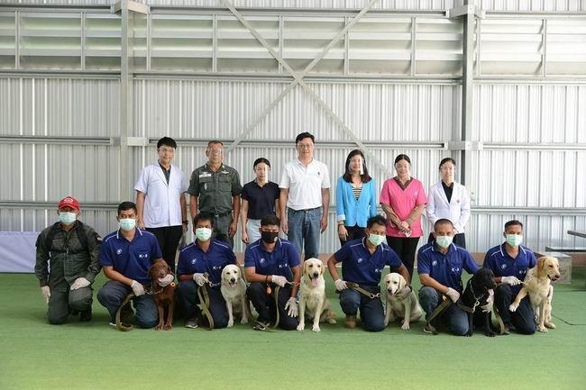 Taylandlı bilim insanları 6 köpeği Covid-19 testi için eğitti