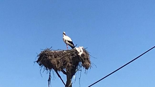 Yılın ilk leyleği Çanakkale'ye geldi