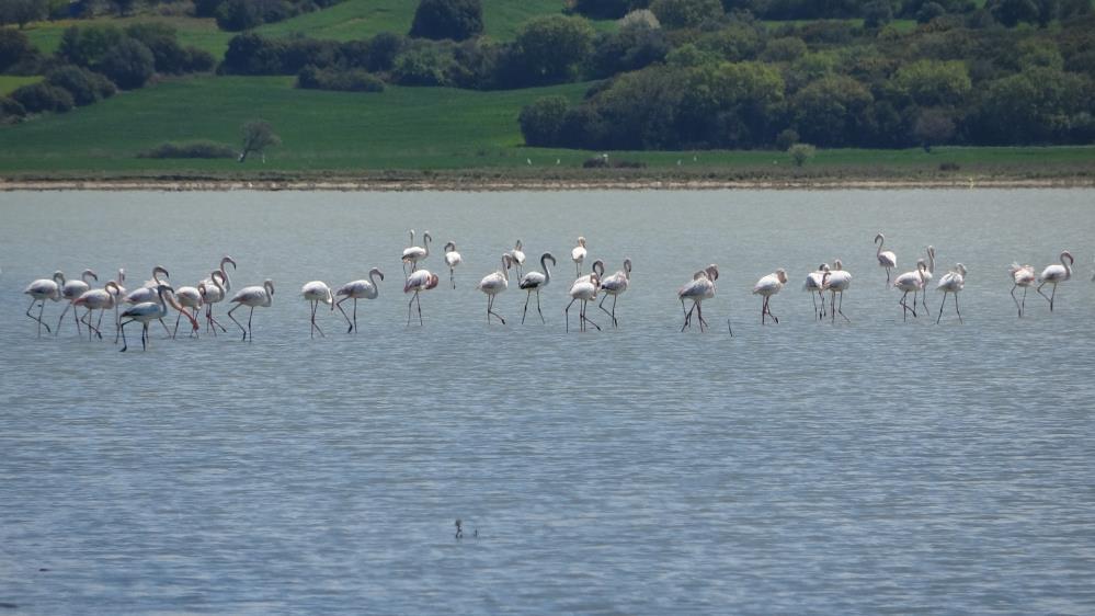 Flamingolar Tarihi Alanda