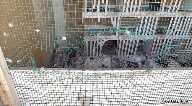 Köpekler 40 güvercini parçaladı